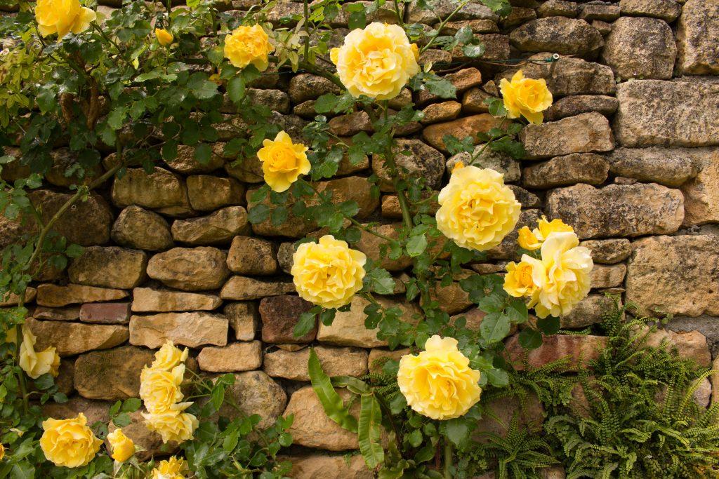 Les Jardins Panoramiques - roses